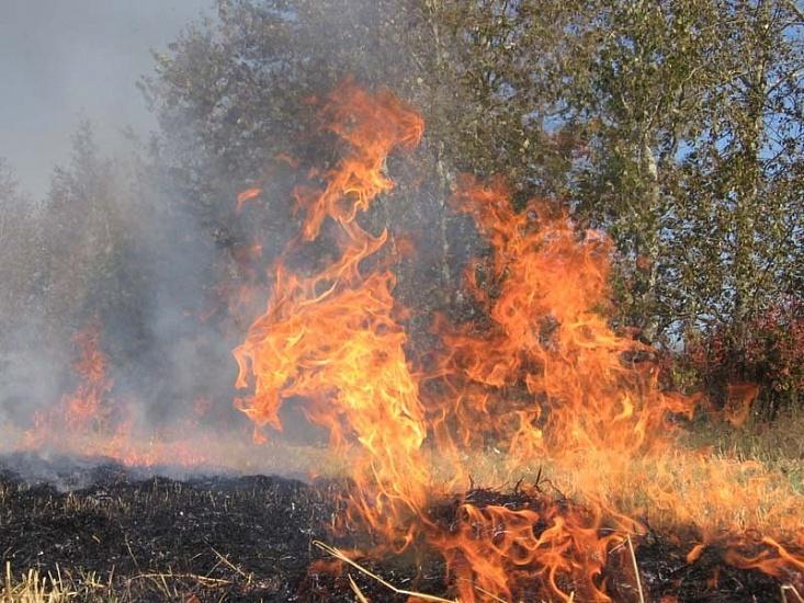 За добу на Волині ліквідували вісім пожеж в екосистемах