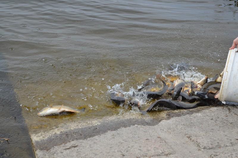 У водосховище на Волині випустили понад 1200 кілограмів риби
