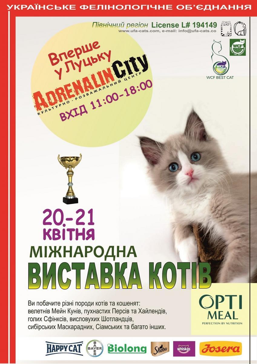 У Луцьку відбудеться міжнародна виставка котів