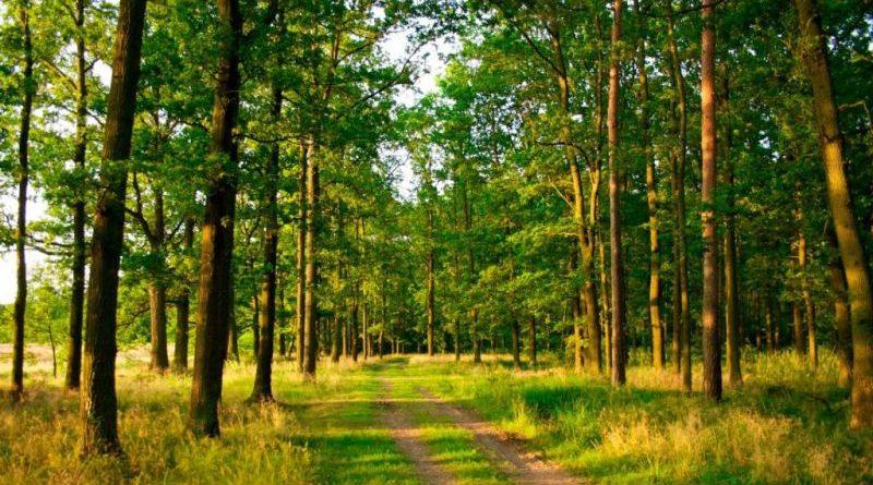 На Волині вимагатимуть повернути 77 га земель до лісового фонду