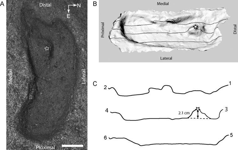 Палеонтологи знайшли найдавніший слід людини на американських континентах