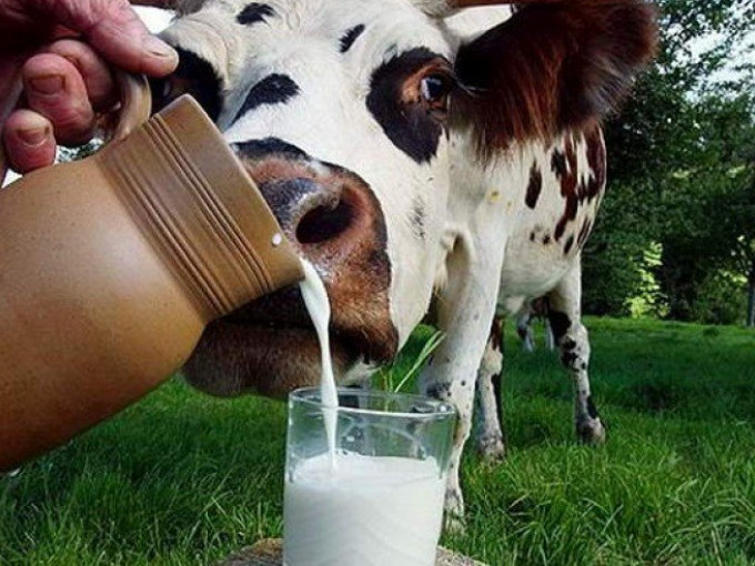 На Волині зменшилась закупівельна вартість худоби