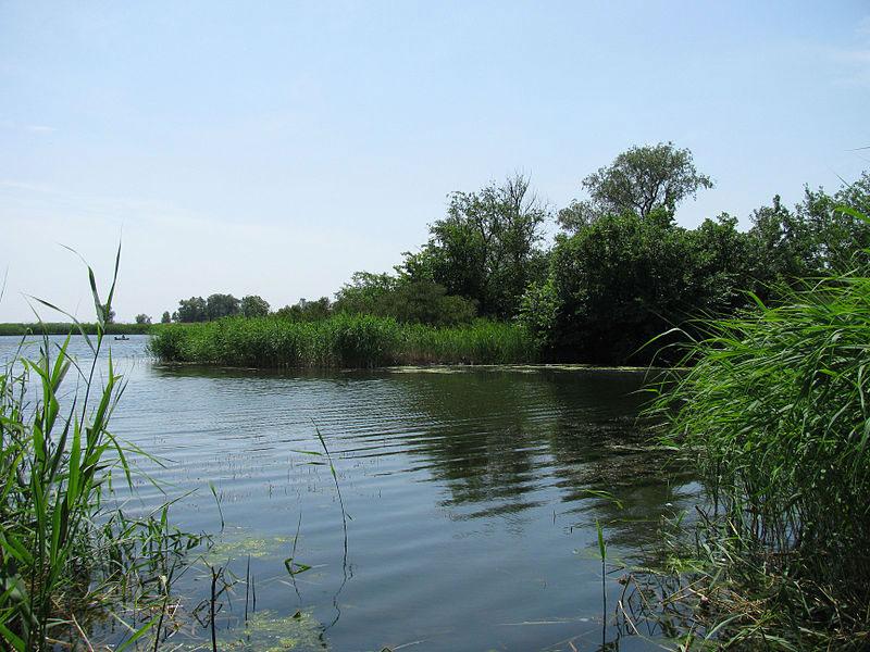 Екологи знайшли антибіотики в річковій воді по всьому світу