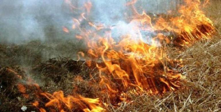 В урочищі на Волині трапилась пожежа