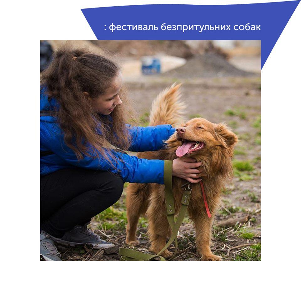 Розповіли, що чекає на гостей фестивалю безпритульних собак у Луцьку