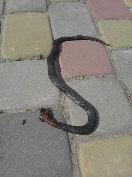 На Волині змії покусали двох людей