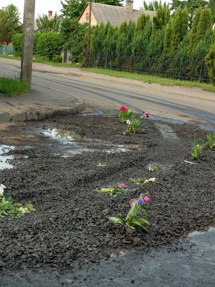 У Луцьку в ямах на дорозі висадили квіти. ФОТО