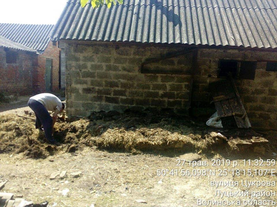 Гноївка, свині та купи сміття: у Луцьку демонтували незаконні сараї. ФОТО