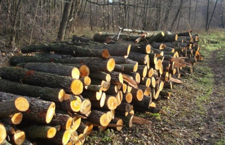 Волинське підприємство сплатить громаді кошти за зрізані дерева