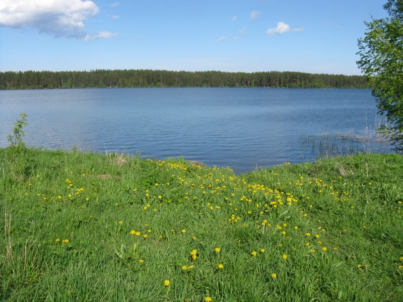 На Волині приватне підприємство привласнило ділянку з озером площею майже 25 гектарів