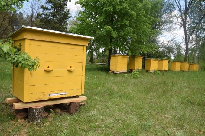 Волинські лісівники працюють над розвитком медової справи. ФОТО