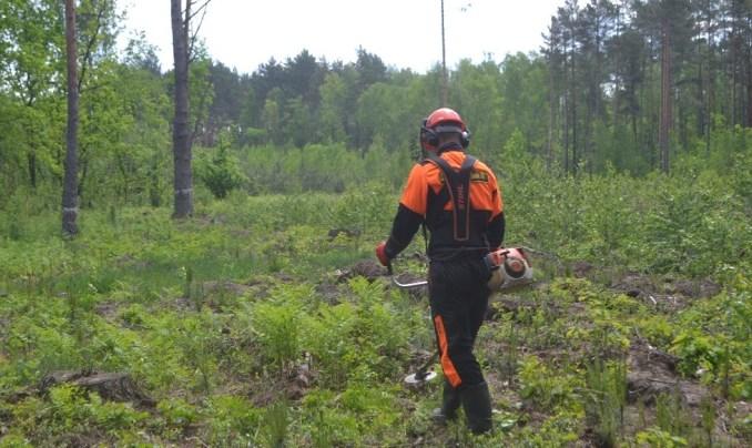 Волинські лісівники розповіли, як правильно доглядати за сіянцями. ВІДЕО