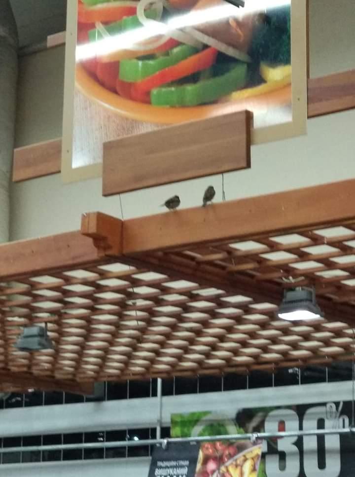 У відомому супермаркеті Луцька помітили птахів