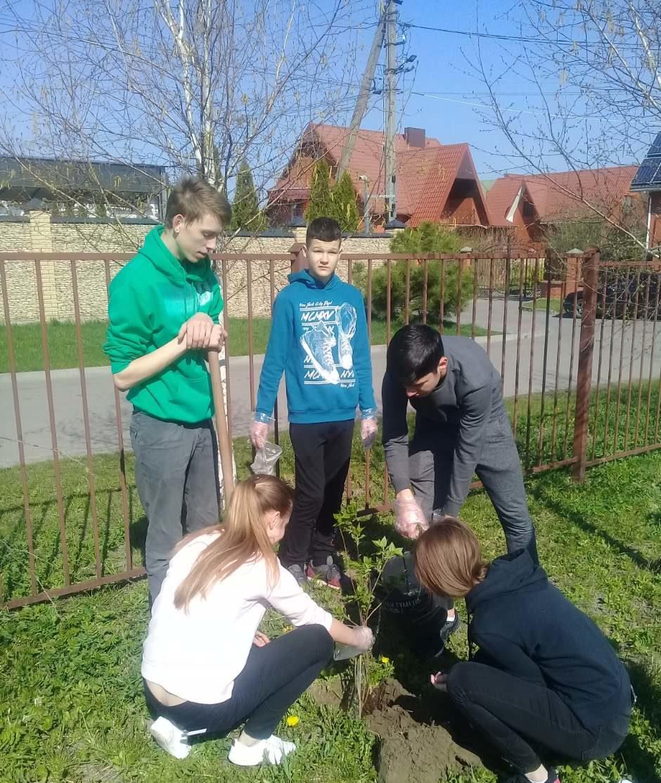 На Волині старшокласники власноруч висадили бузкову алею