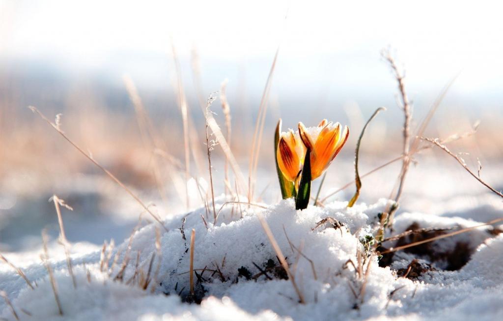 Метеорологи повідомили, де в Україні чекати снігу