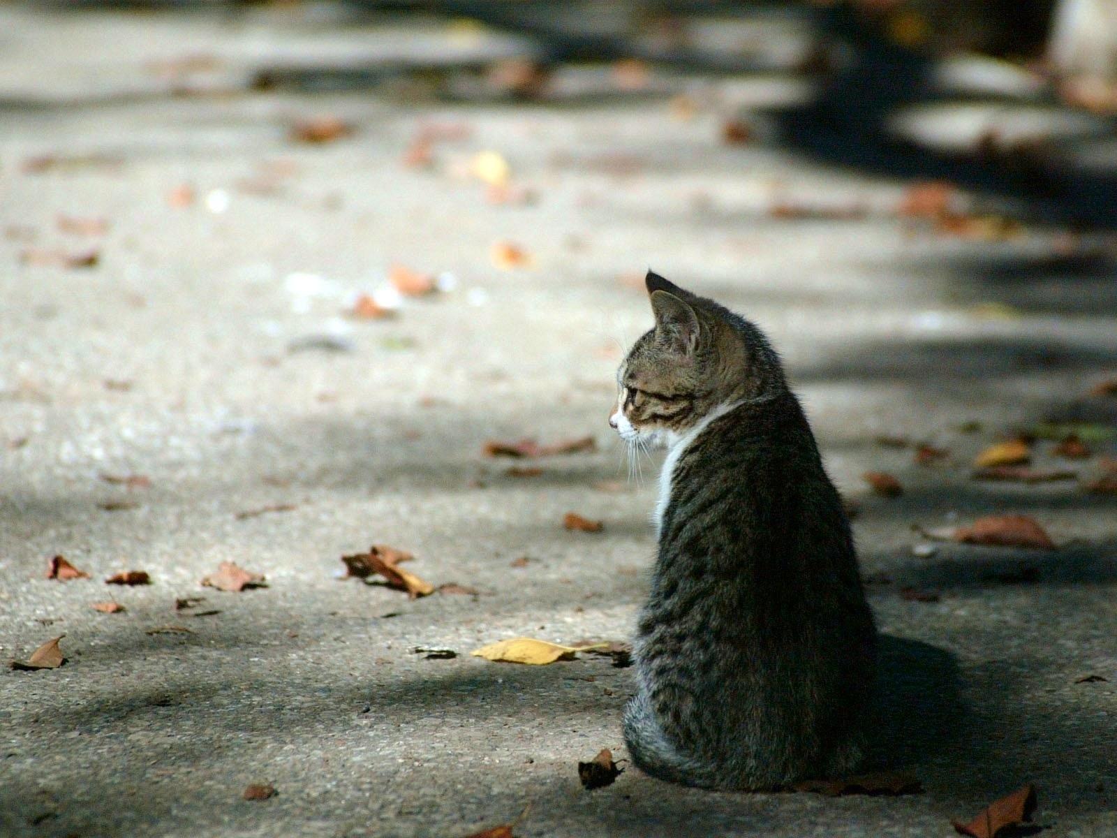 У Луцьку знайшли кішку без очей. ФОТО 18+