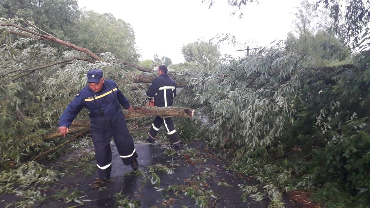 На Волині сильна злива та буревій повалили дерева на дороги. ФОТО