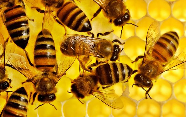 На Волині масово гинуть бджоли. ВІДЕО