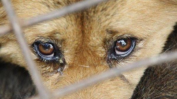 Волинянину загрожує до восьми років позбавлення волі за жорстоке поводження з тваринами