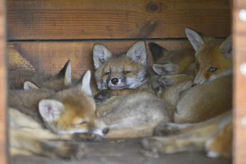 У луцькому зоопарку спростували вплив гучної музики на здоров'я тварин