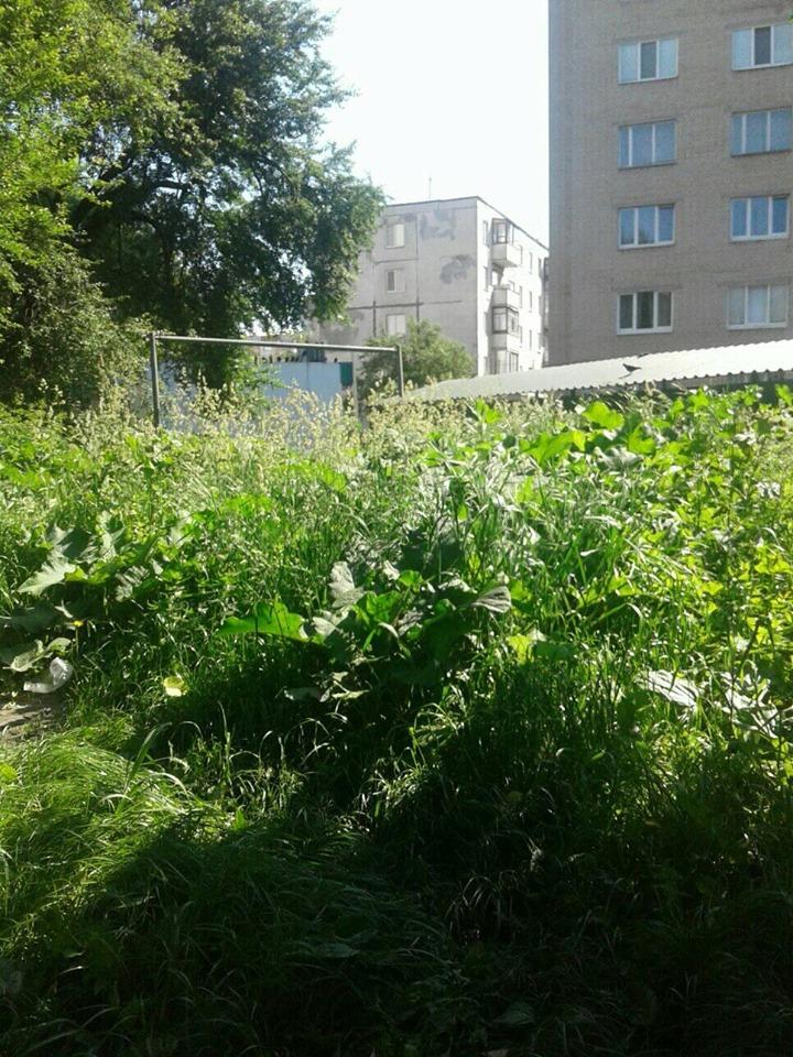 Лучани скаржаться, що їхній двір покрився бур'янами та високою травою. ФОТО