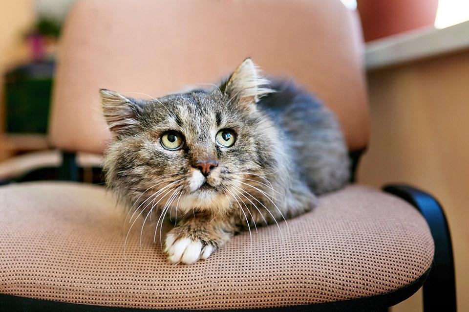 У Луцьку шукають сім'ю для котика без однієї лапки. ФОТО