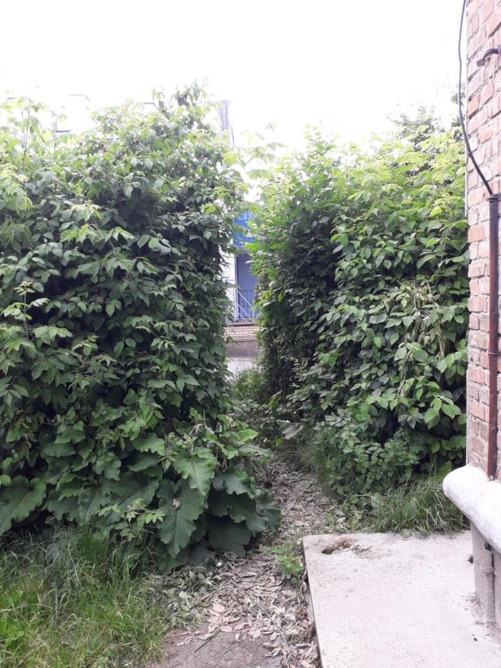 Лучани скаржаться на «джунглі», що виросли в їхньому дворі. ФОТО