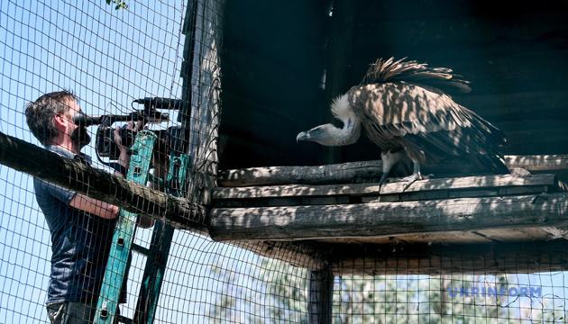 У Бердянському зоопарку народилося рідкісне пташеня