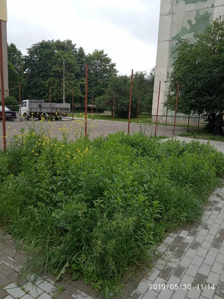 У Луцьку скаржаться на нескошену траву у дворі