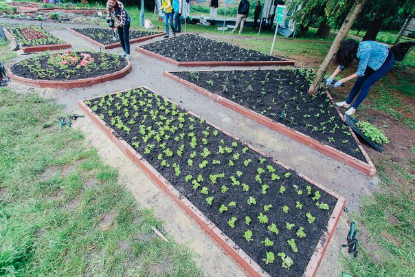 Лучан запрошують посадити спільний міський овочевий город