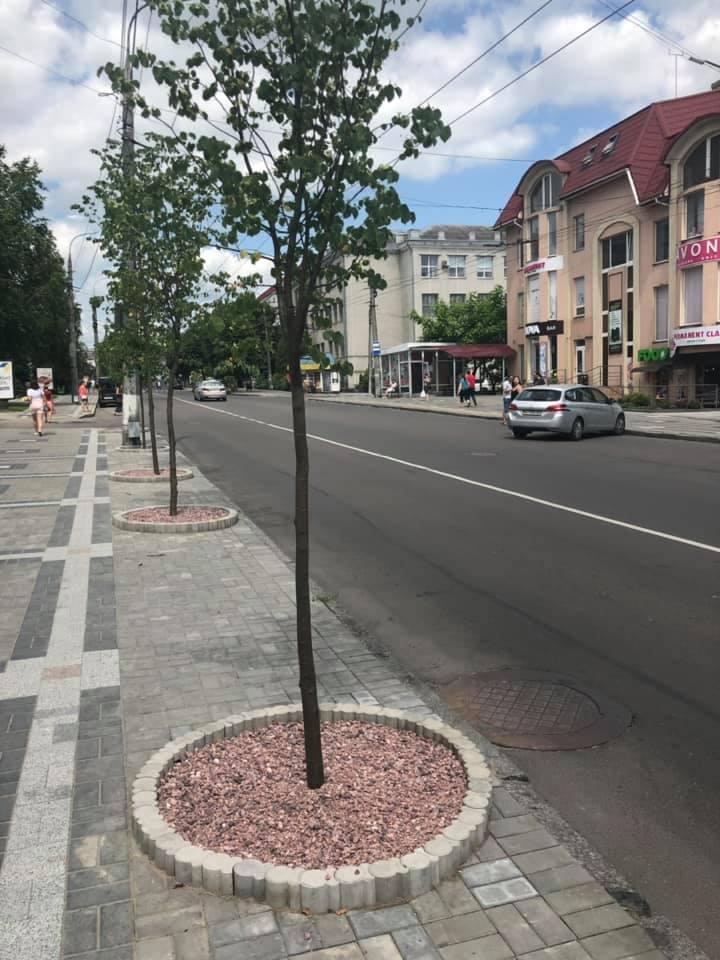 У Луцьку на одній із вулиці висадили липи та окультурили місця посадки. ФОТО