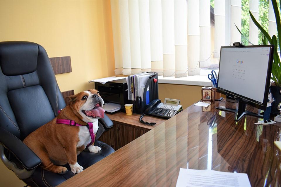 Адміністратори луцького ЦНАПу долучилися до акції «Візьми собаку на роботу»