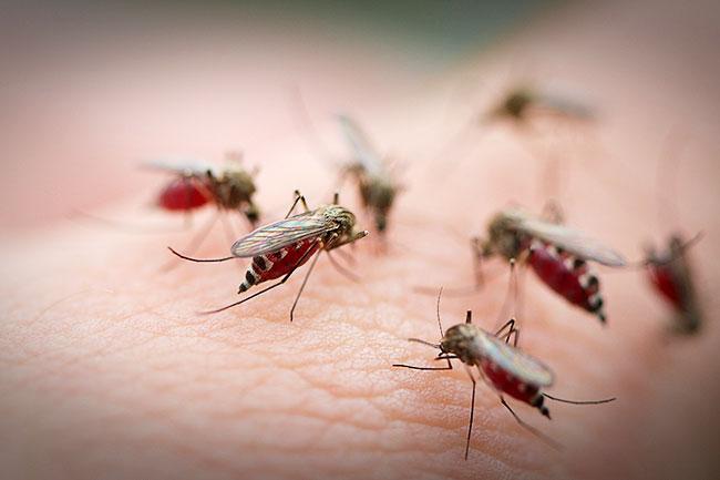 У Луцьку б'ють на сполох через комарів