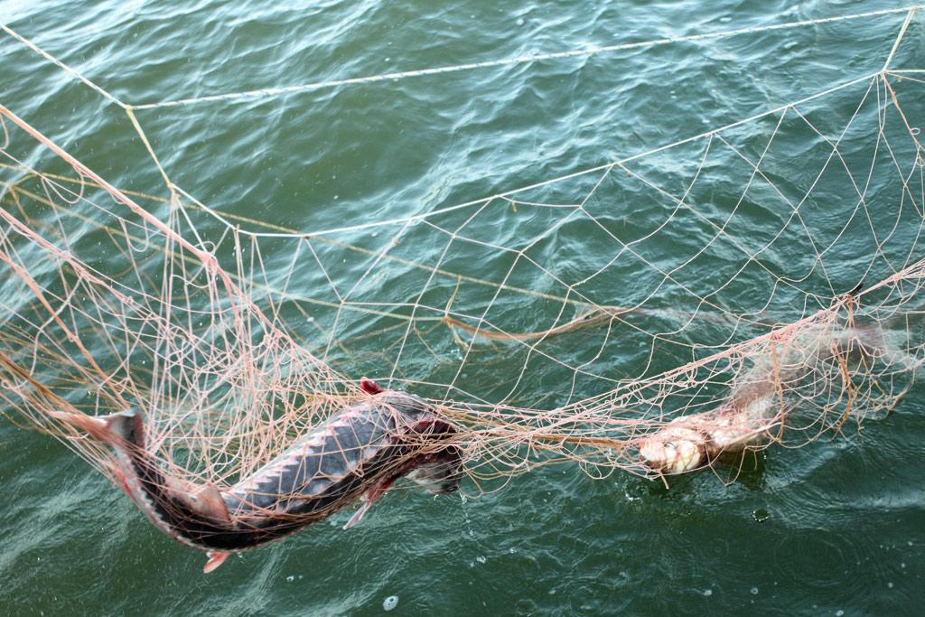 На Прип'яті чоловік ловив рибу «острогою»