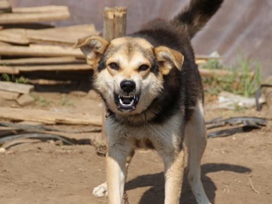 Зграя собак напала на дитину у Луцьку