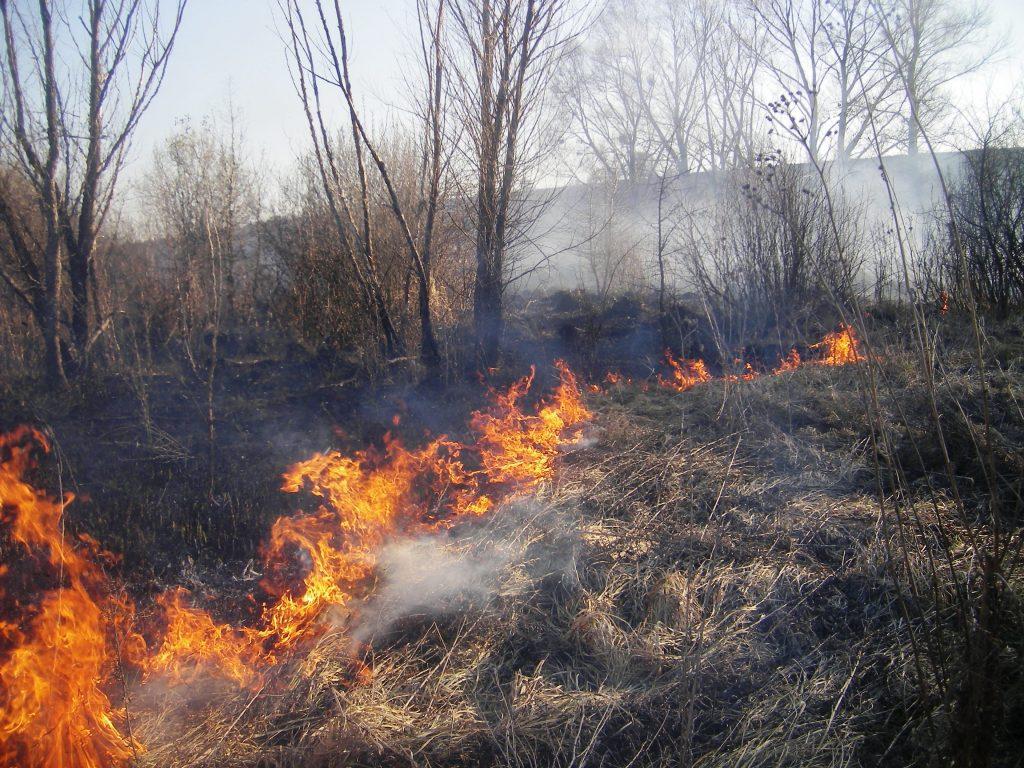 Поліція попереджає волинян про відповідальність за спалювання сухої трави