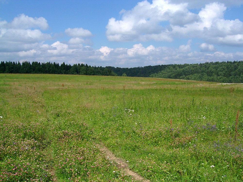 Громаді на Волині повернули земельні ділянки площею майже сім гектарів