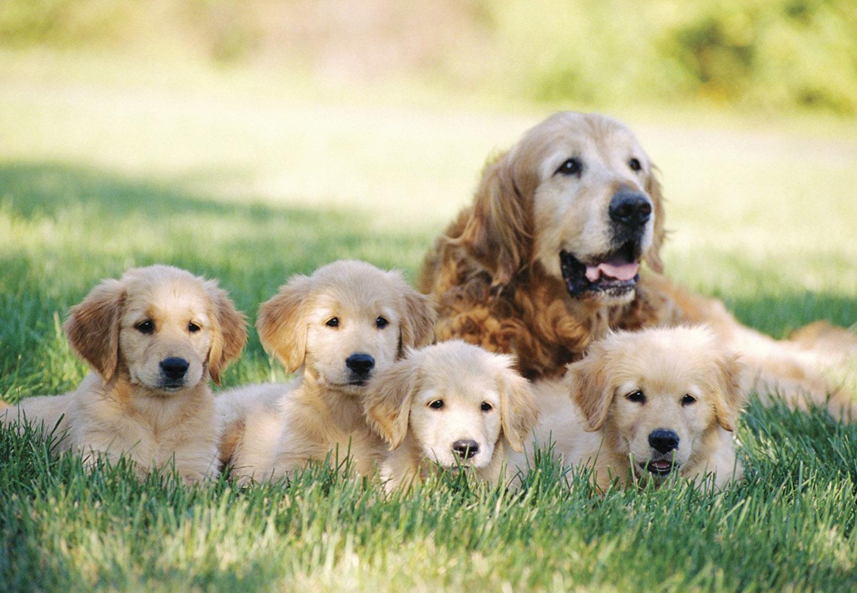Лучанка просить заборонити продаж породистих собак без документів