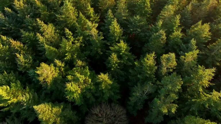 На Волині відбувся обласний зліт учнівських лісництв