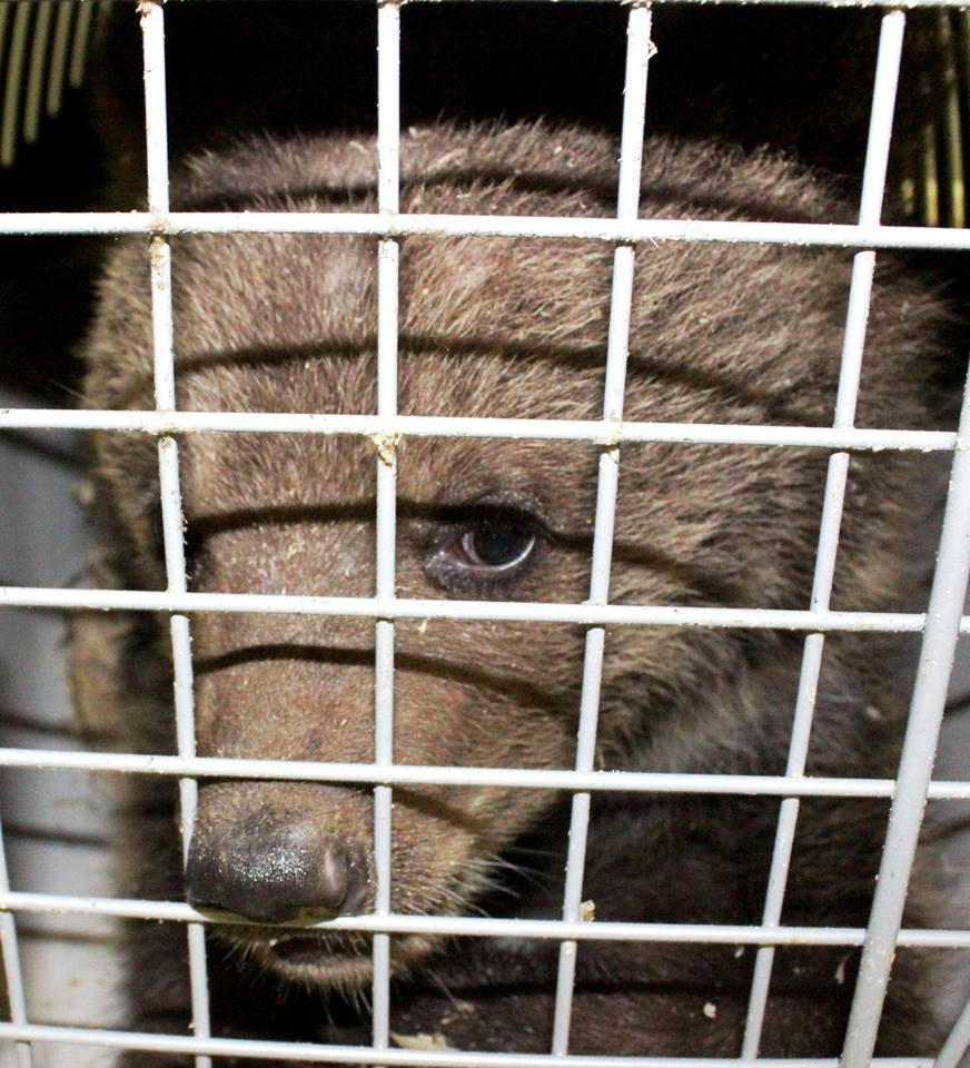 Волинян штрафуватимуть за жорстоке поводження з дикими тваринами