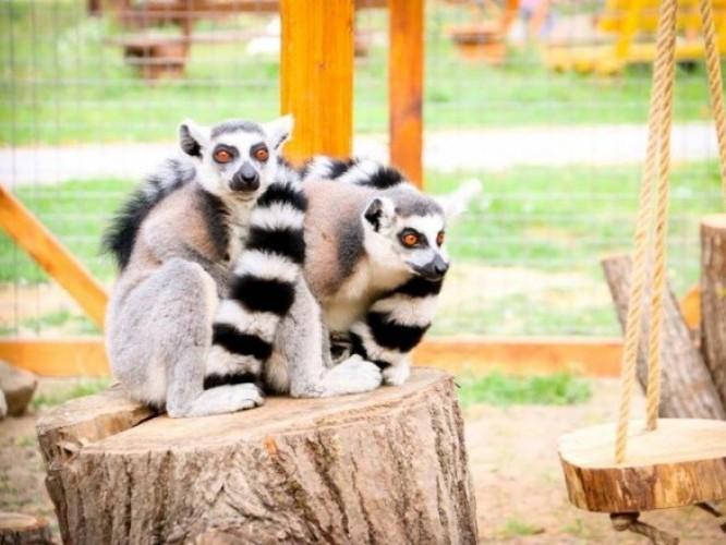 Лучанка просить тиші для тварин зоопарку