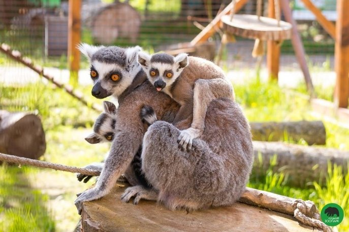 Луцькому зоопарку передадуть тварин із Національного цирку України