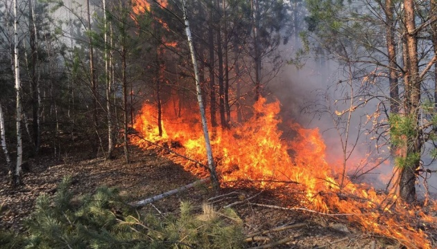 На Луганщині горить замінований ліс