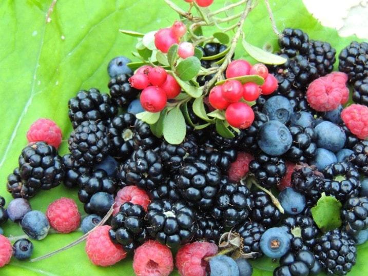 На Волині затримали підприємця, який незаконно експортував ягоди та гриби до Прибалтики