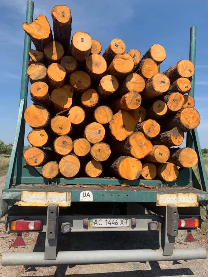 На Волині масово вирубують ліс