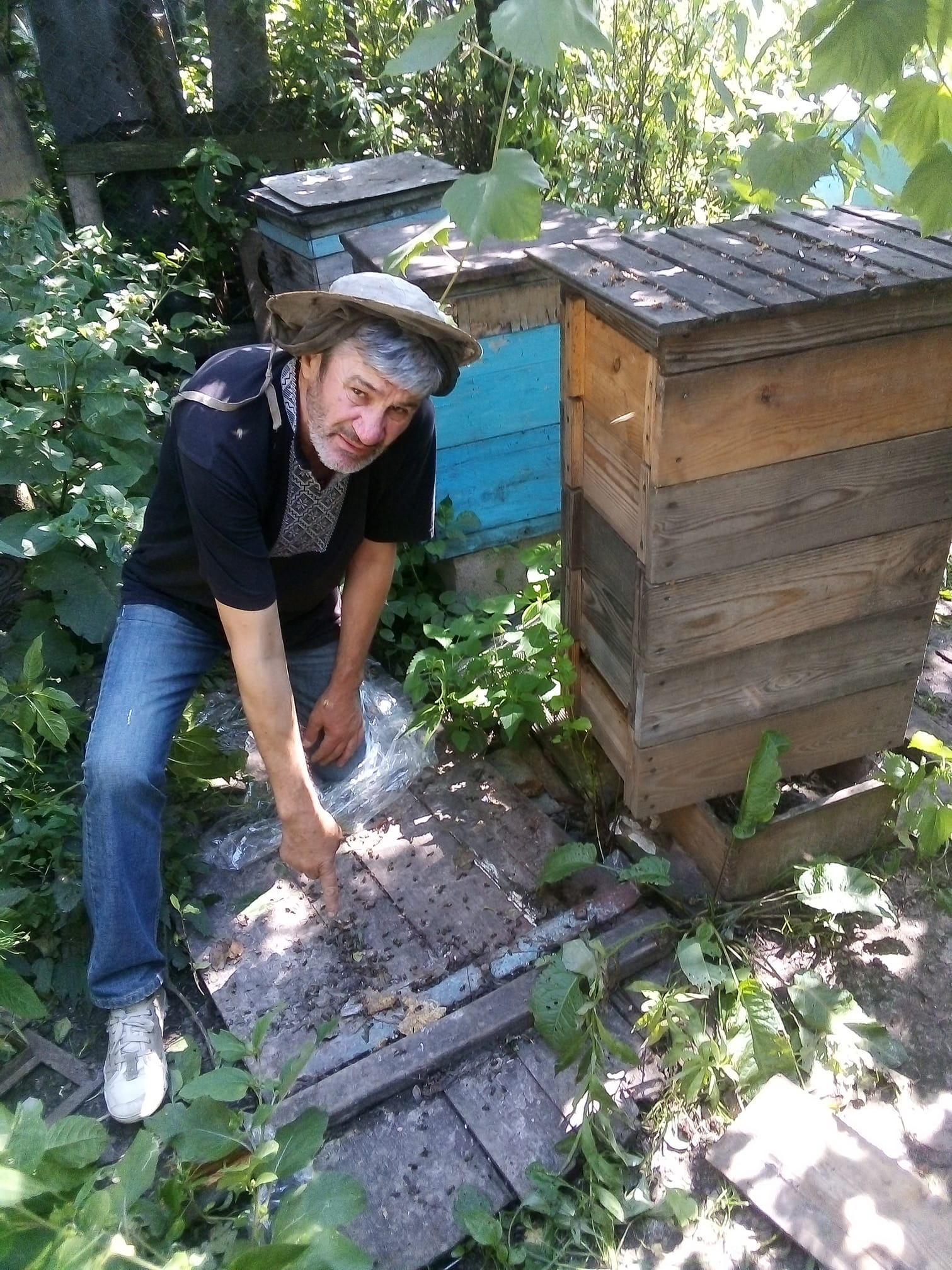 У Луцькому районі гинуть бджоли