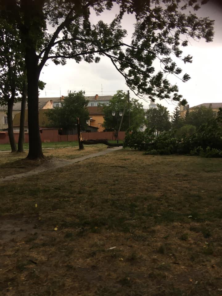 У місті на Волині сильний вітер зніс дерево. ФОТО