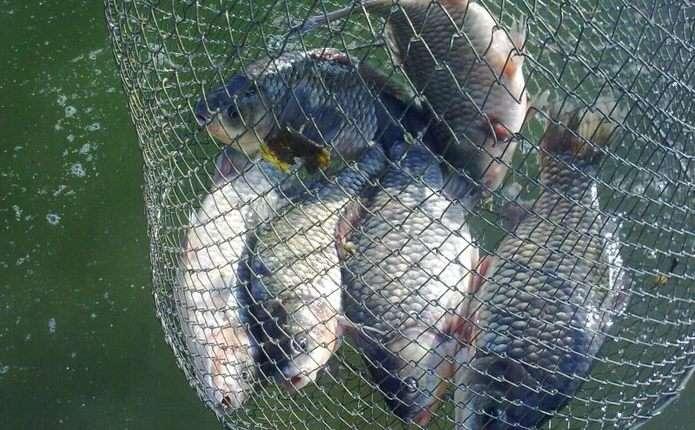 За тиждень рибоохоронний патруль Волині зафіксував 15 порушень