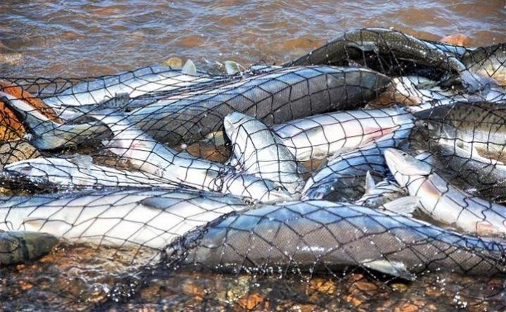 394 порушення на понад 50 тисяч гривень збитків: підсумки рибоохоронної діяльності за нерестовий період 2019 року