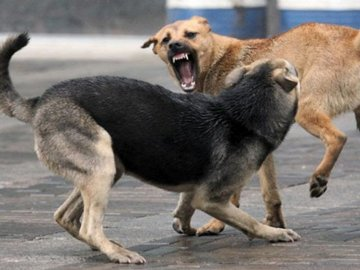 У Луцьку бродяча собака їсть своїх щенят. ВІДЕО 18+